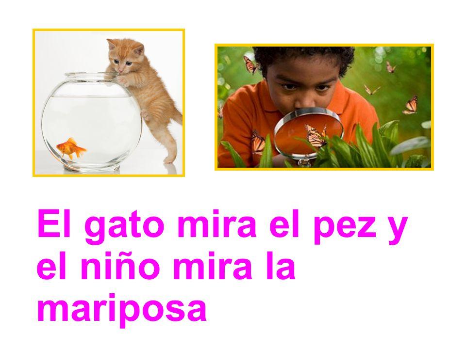El gato mira el pez y el niño mira la mariposa
