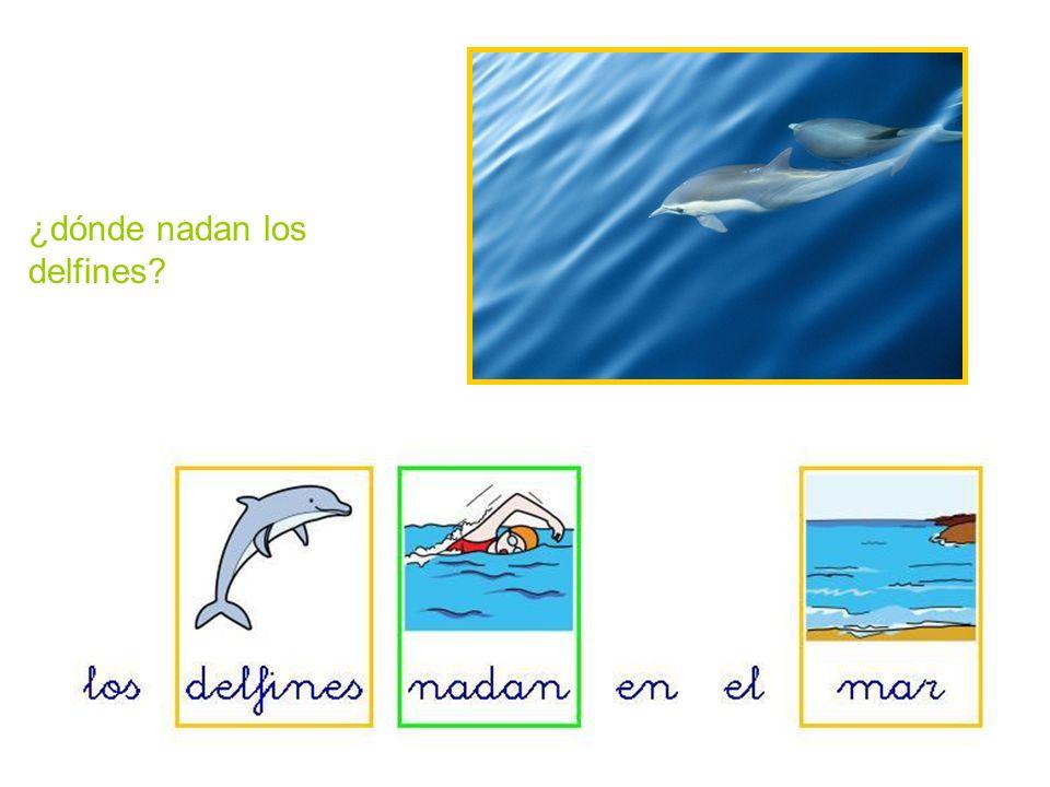 ¿dónde nadan los delfines