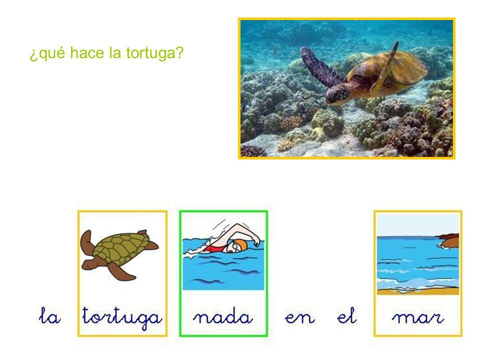 ¿qué hace la tortuga