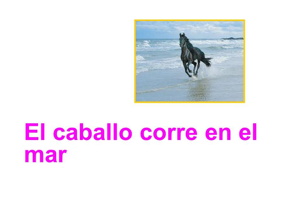 El caballo corre en el mar