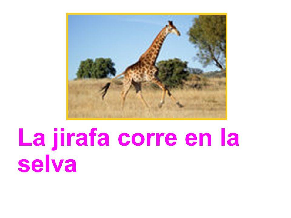 La jirafa corre en la selva
