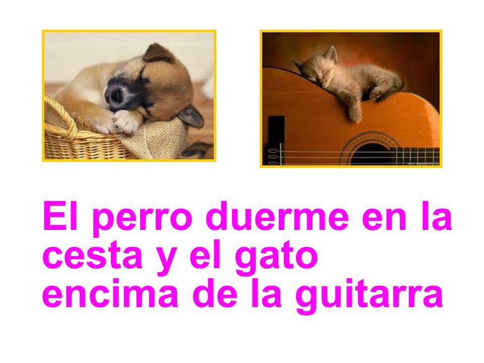 El perro duerme en la cesta y el gato encima de la guitarra