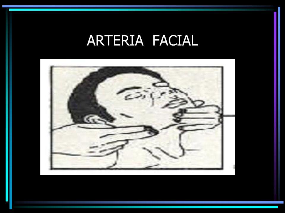 ARTERIA FACIAL