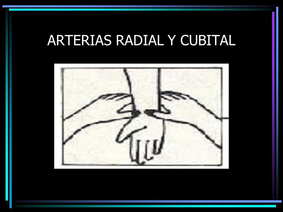ARTERIAS RADIAL Y CUBITAL