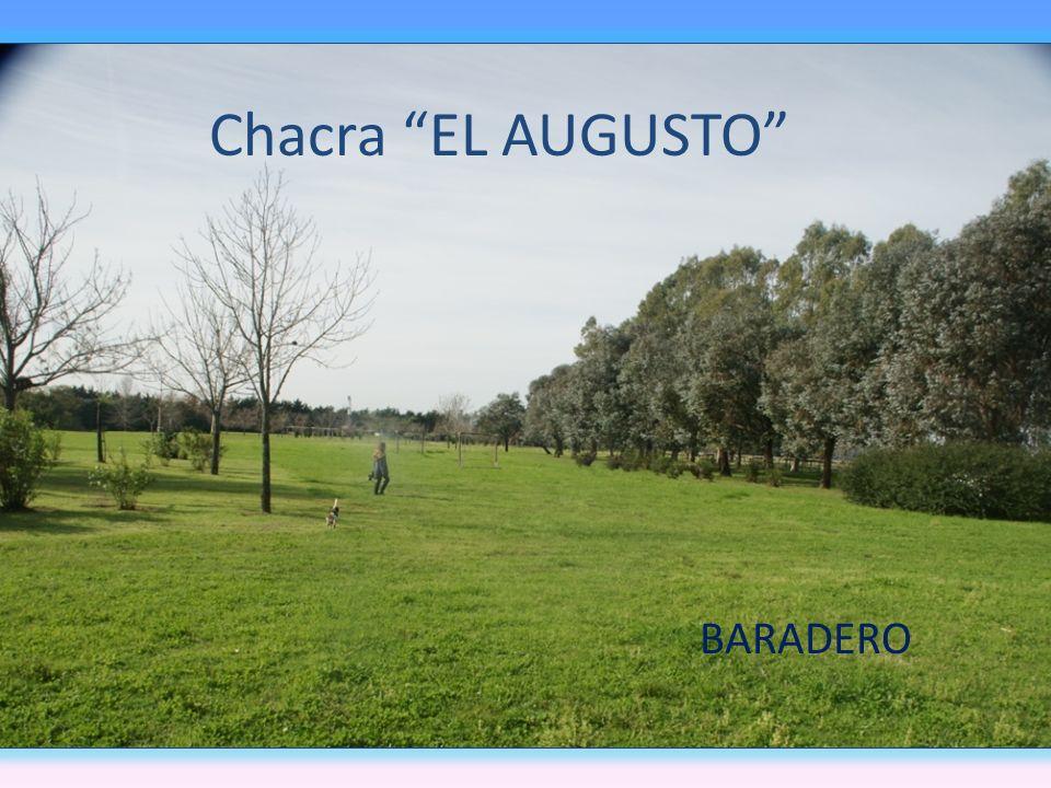 Chacra EL AUGUSTO BARADERO