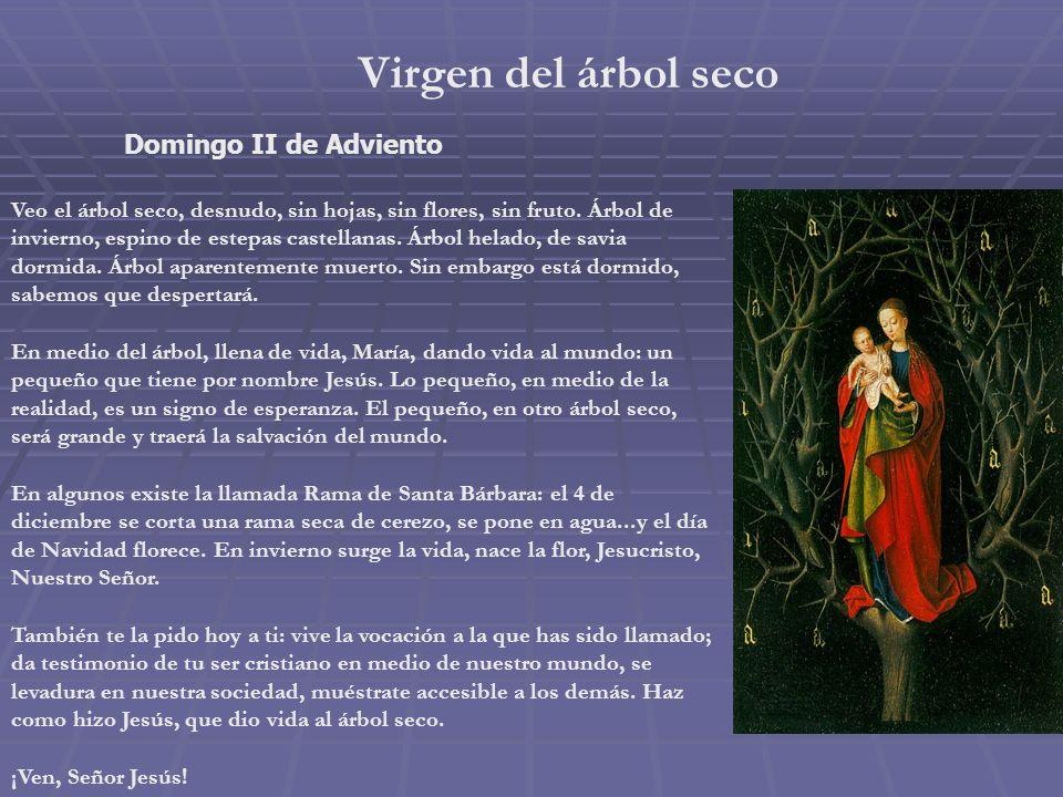Virgen del árbol seco Domingo II de Adviento