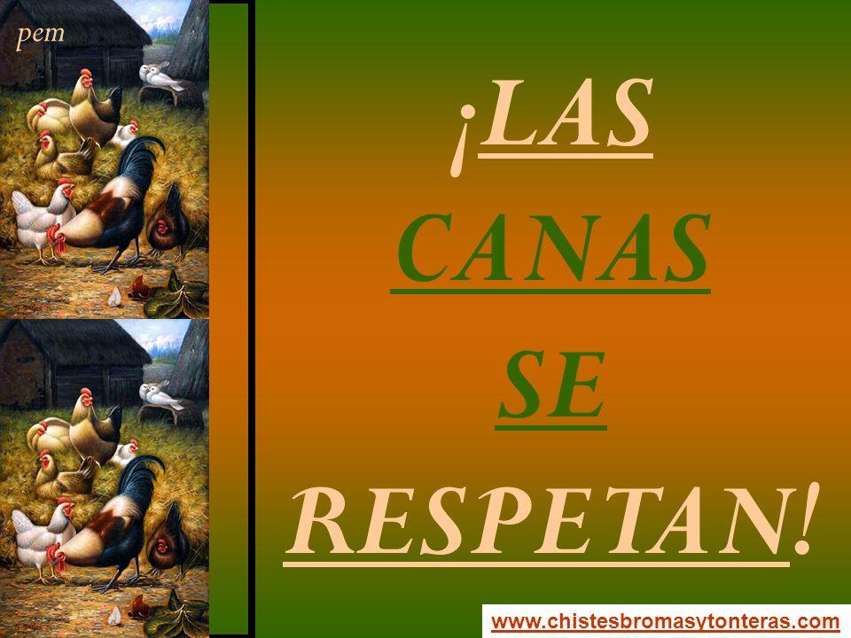 pem ¡LAS CANAS SE RESPETAN! www.chistesbromasytonteras.com
