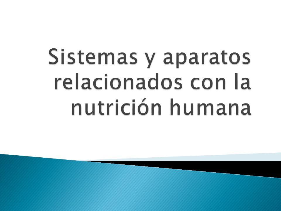 Sistemas y aparatos relacionados con la nutrición humana