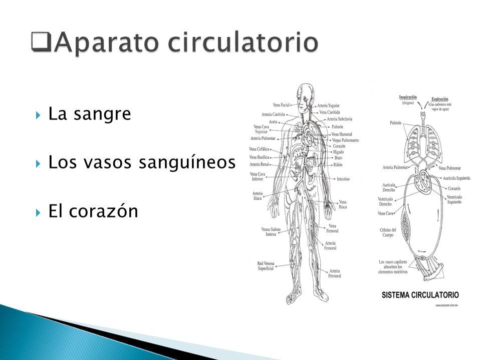 Aparato circulatorio La sangre Los vasos sanguíneos El corazón