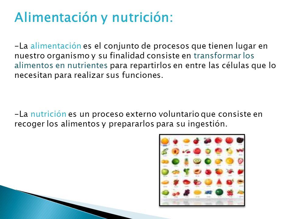 Alimentación y nutrición: