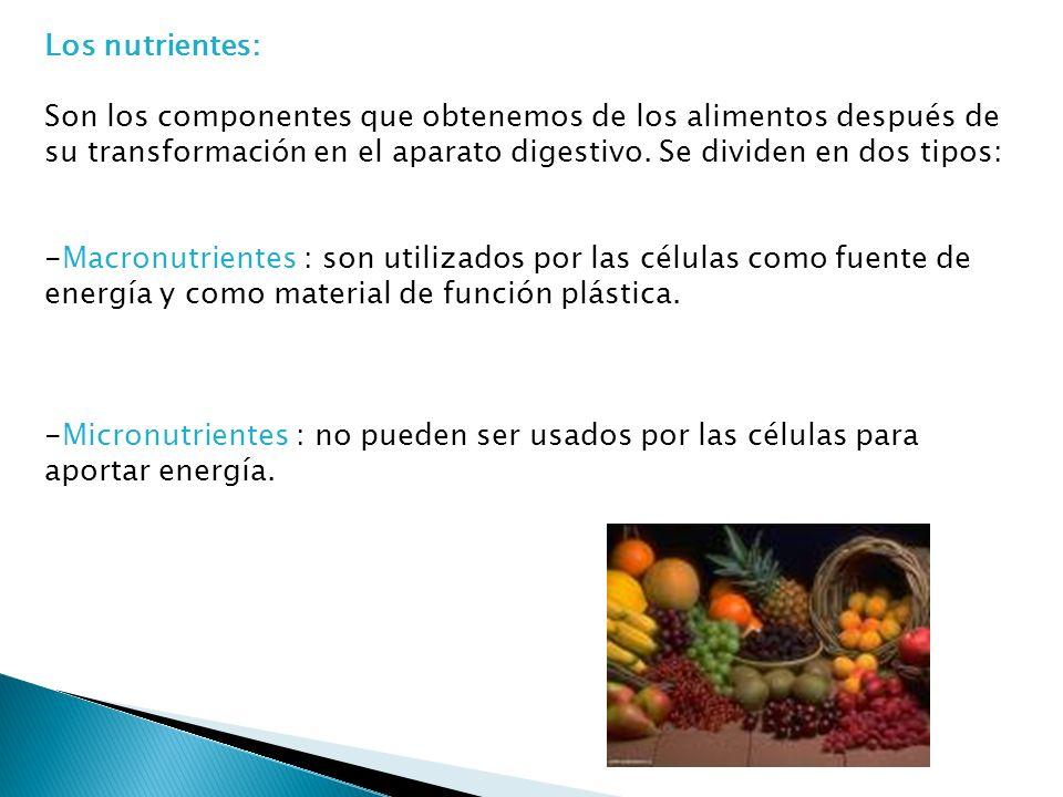 Los nutrientes: Son los componentes que obtenemos de los alimentos después de su transformación en el aparato digestivo. Se dividen en dos tipos: