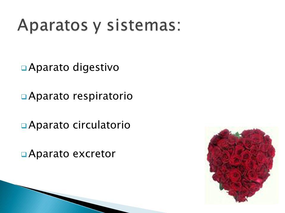 Aparatos y sistemas: Aparato digestivo Aparato respiratorio