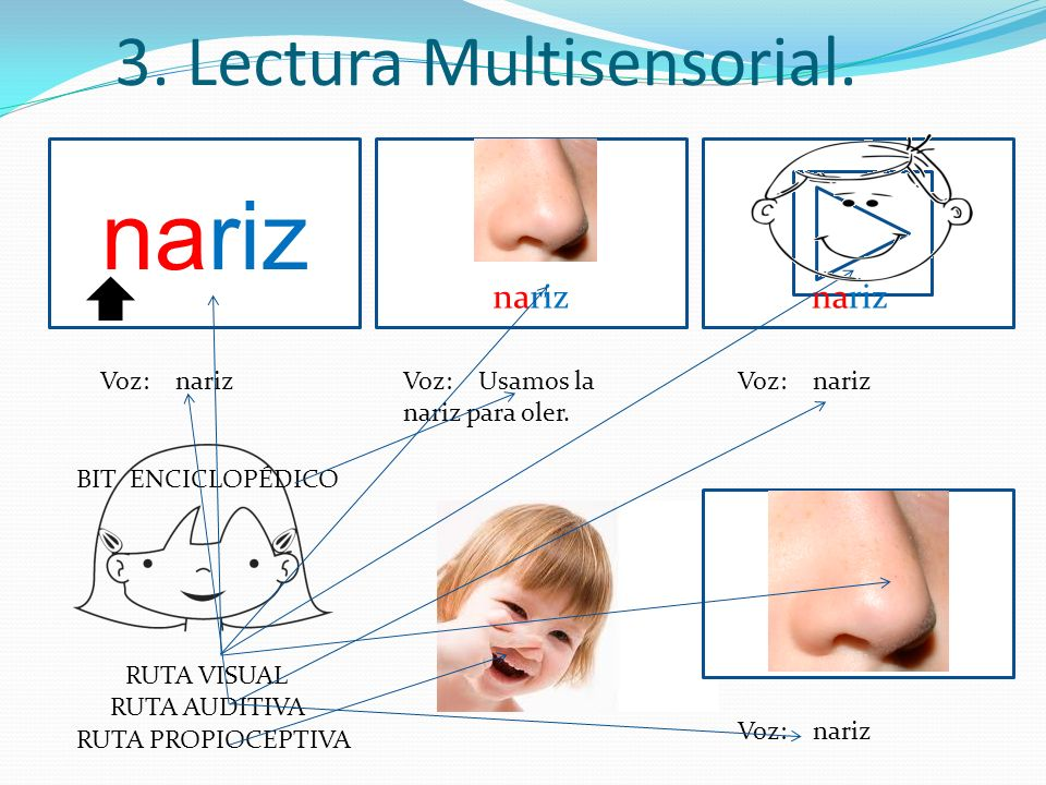 nariz 3. Lectura Multisensorial. nariz nariz Voz: nariz