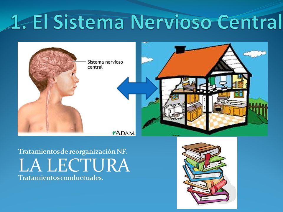 1. El Sistema Nervioso Central