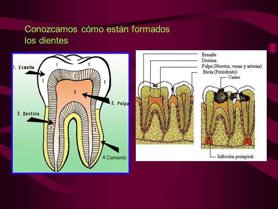 Conozcamos cómo están formados los dientes