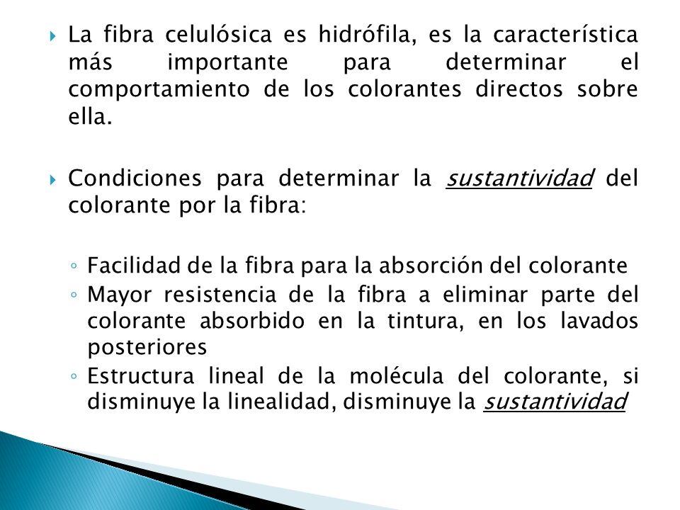La fibra celulósica es hidrófila, es la característica más importante para determinar el comportamiento de los colorantes directos sobre ella.
