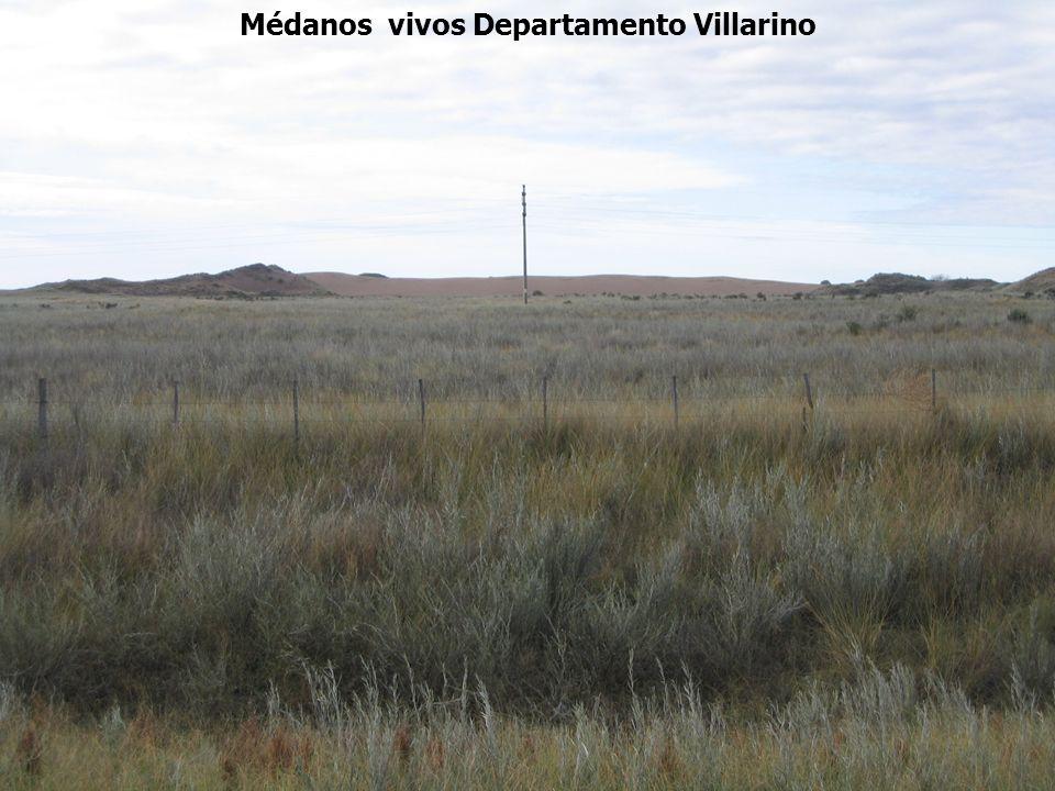 Médanos vivos Departamento Villarino