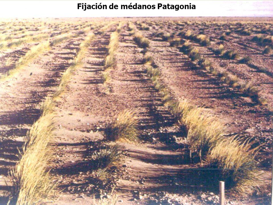 Fijación de médanos Patagonia