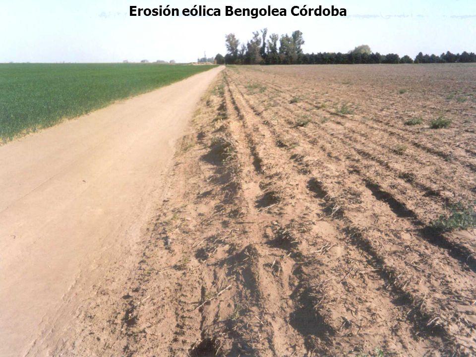 Erosión eólica Bengolea Córdoba