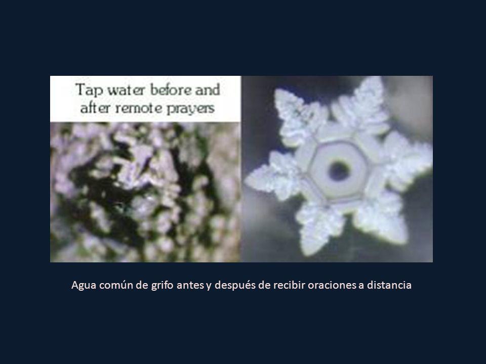 Agua común de grifo antes y después de recibir oraciones a distancia
