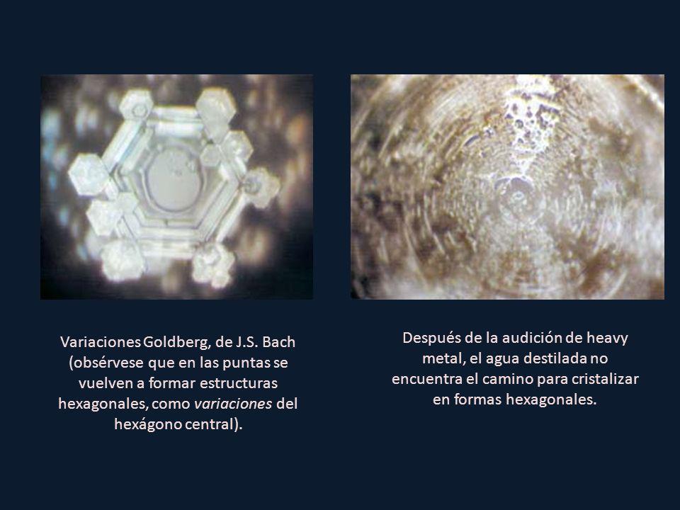 Después de la audición de heavy metal, el agua destilada no encuentra el camino para cristalizar en formas hexagonales.