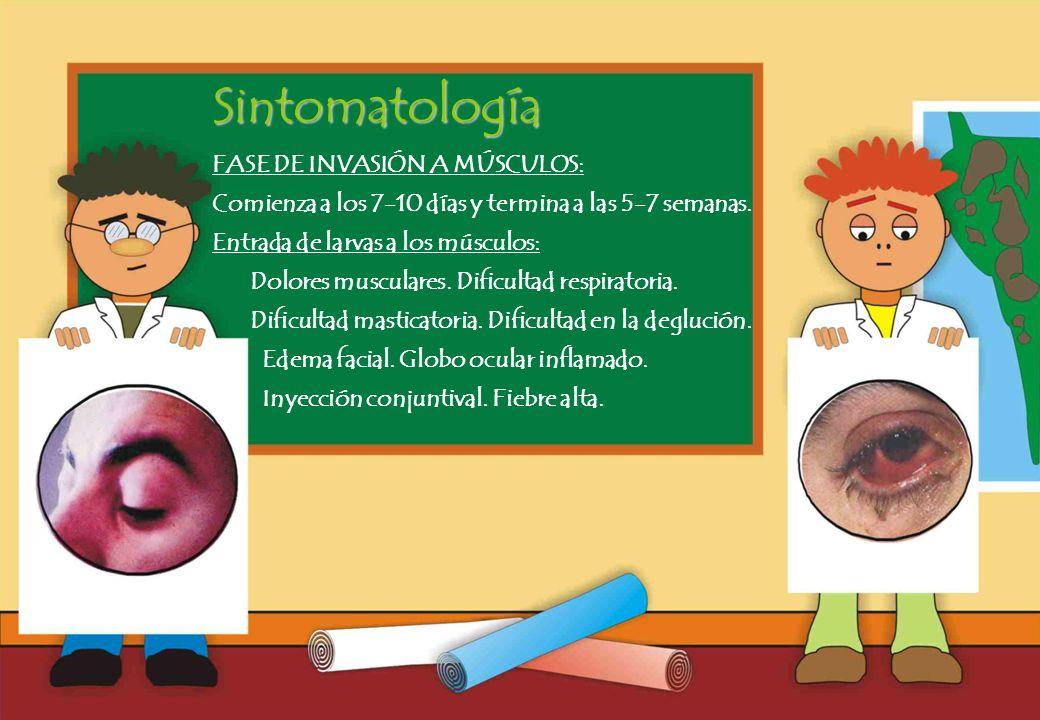 Sintomatología FASE DE INVASIÓN A MÚSCULOS: