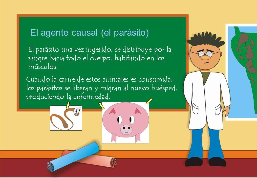 El agente causal (el parásito)