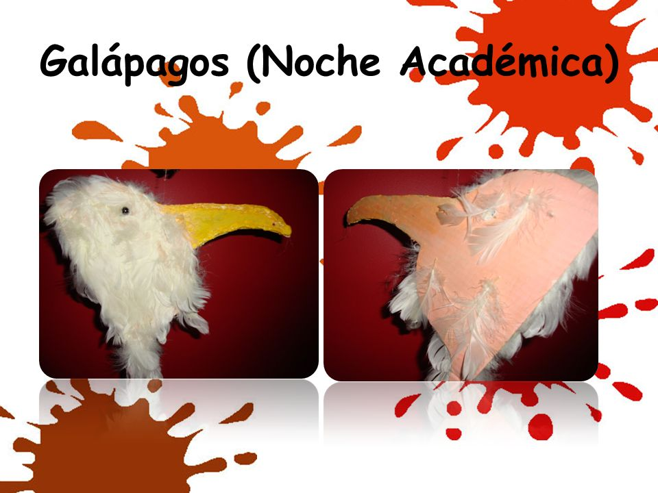 Galápagos (Noche Académica)