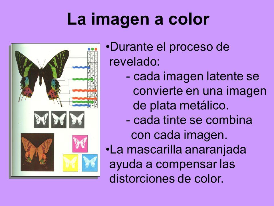 La imagen a color Durante el proceso de revelado: