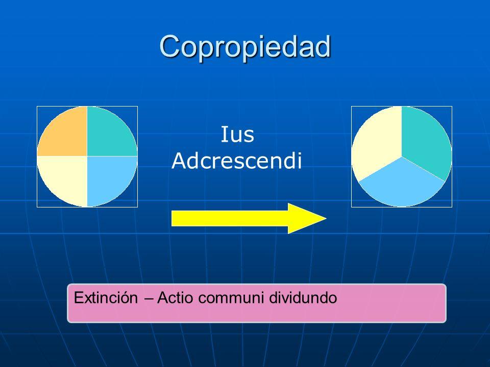 Copropiedad Ius Adcrescendi Extinción – Actio communi dividundo
