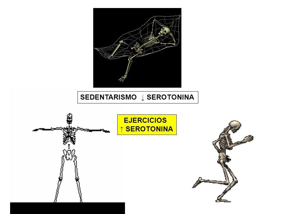SEDENTARISMO ↓ SEROTONINA