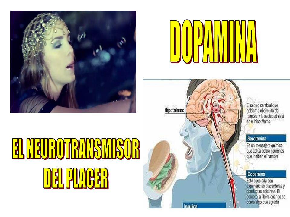 DOPAMINA EL NEUROTRANSMISOR DEL PLACER