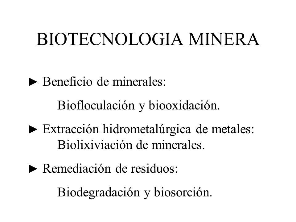 BIOTECNOLOGIA MINERA Biofloculación y biooxidación.