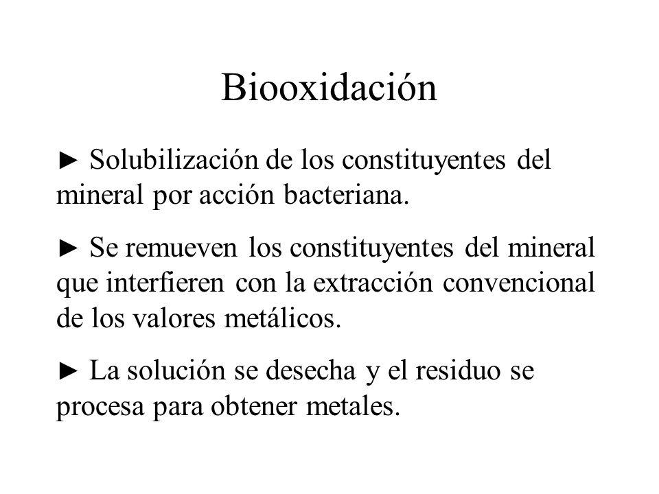 Biooxidación ► Solubilización de los constituyentes del mineral por acción bacteriana.