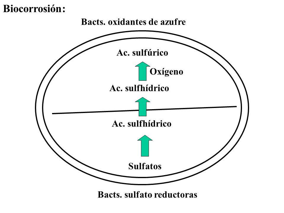 Biocorrosión: Bacts. oxidantes de azufre Ac. sulfúrico Oxígeno