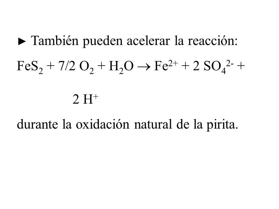 FeS2 + 7/2 O2 + H2O  Fe2+ + 2 SO42- + 2 H+