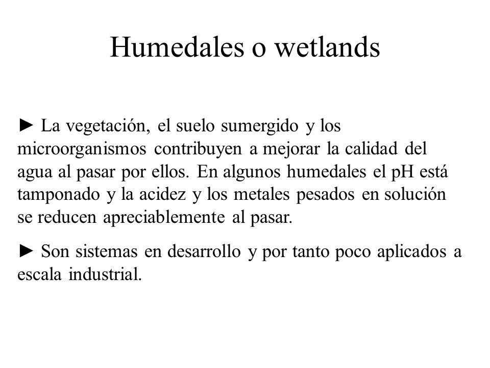 Humedales o wetlands