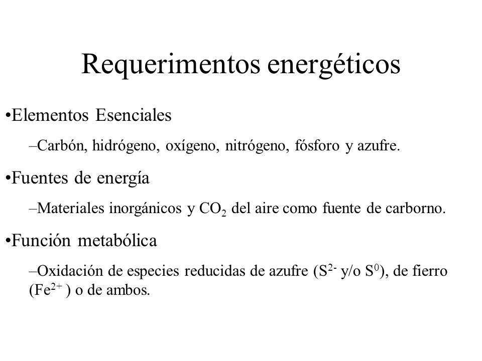 Requerimentos energéticos