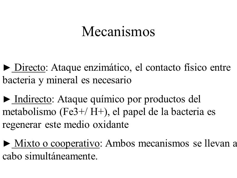 Mecanismos ► Directo: Ataque enzimático, el contacto físico entre bacteria y mineral es necesario.
