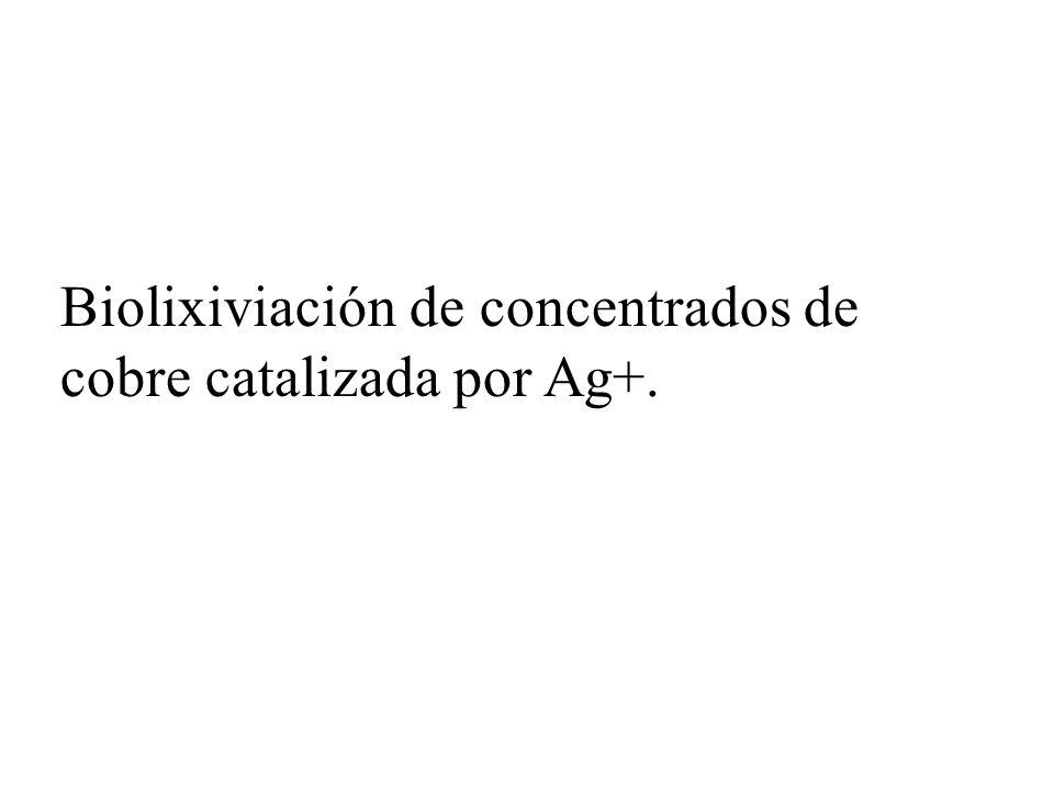 Biolixiviación de concentrados de cobre catalizada por Ag+.