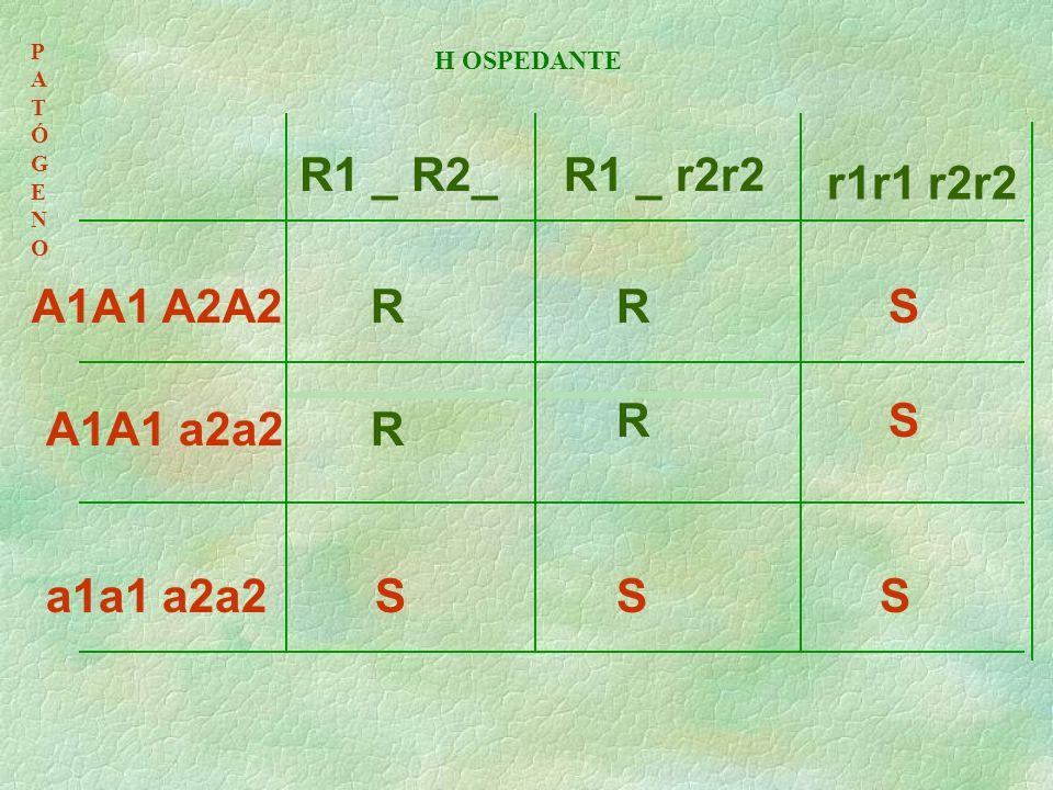 R1 _ R2_ R1 _ r2r2 r1r1 r2r2 A1A1 A2A2 R R S R S A1A1 a2a2 R a1a1 a2a2