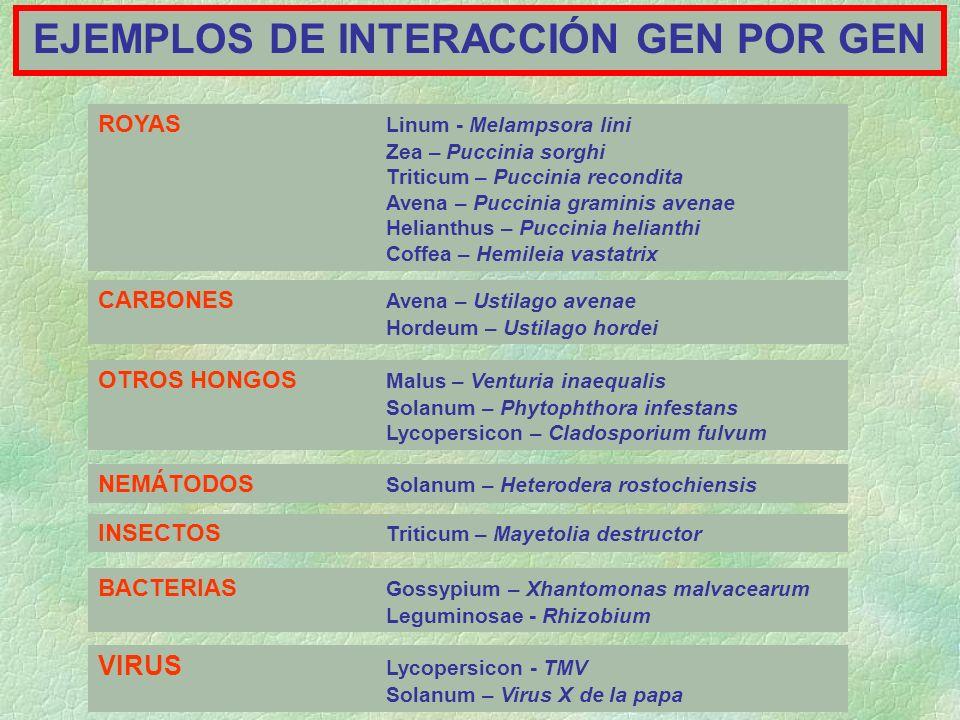 EJEMPLOS DE INTERACCIÓN GEN POR GEN