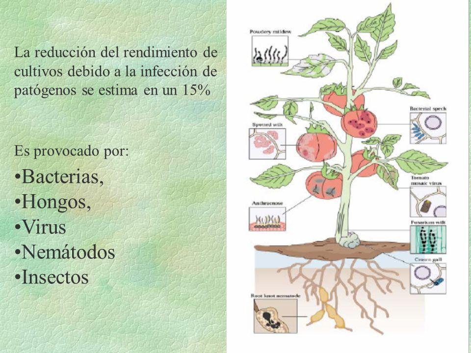Bacterias, Hongos, Virus Nemátodos Insectos