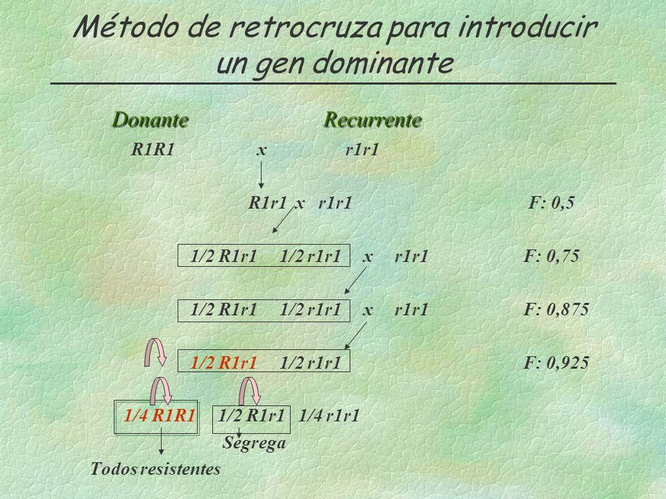 Método de retrocruza para introducir un gen dominante