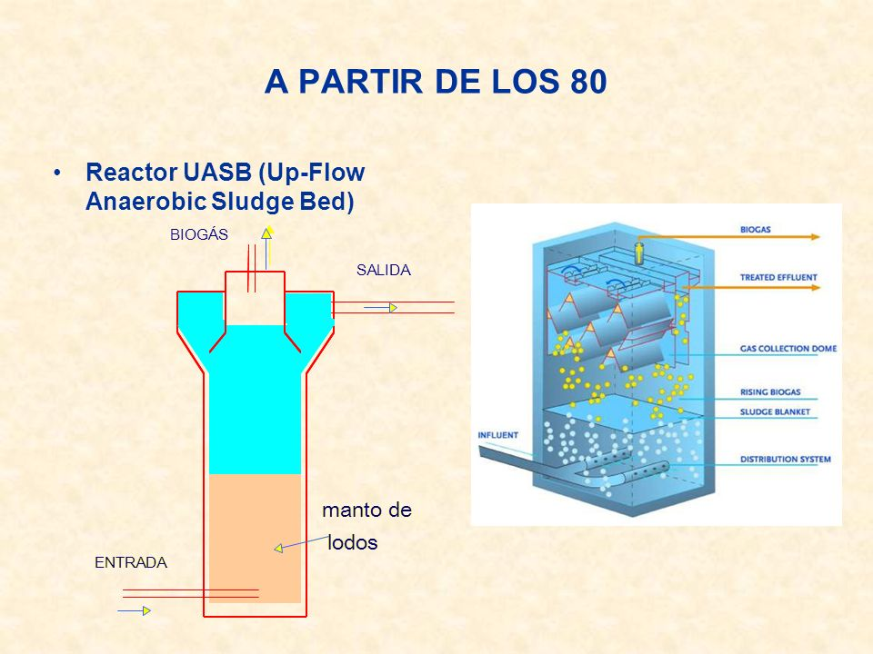 A PARTIR DE LOS 80 Reactor UASB (Up-Flow Anaerobic Sludge Bed)