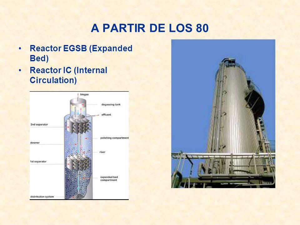 A PARTIR DE LOS 80 Reactor EGSB (Expanded Bed)