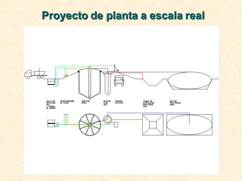 Proyecto de planta a escala real