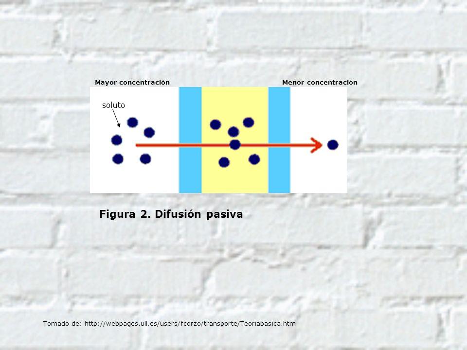 Figura 2. Difusión pasiva