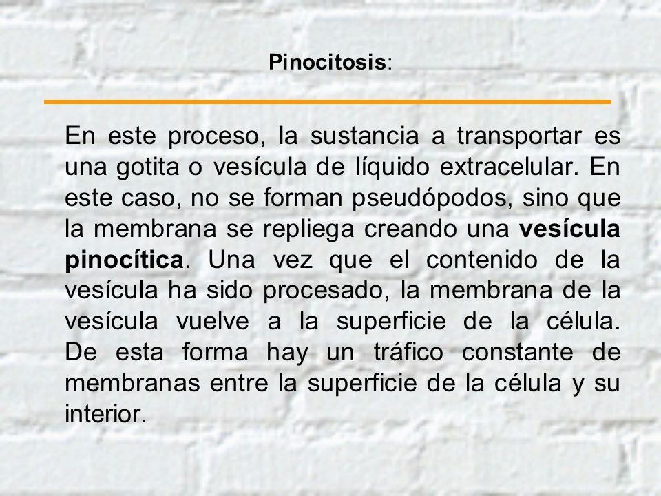 Pinocitosis: