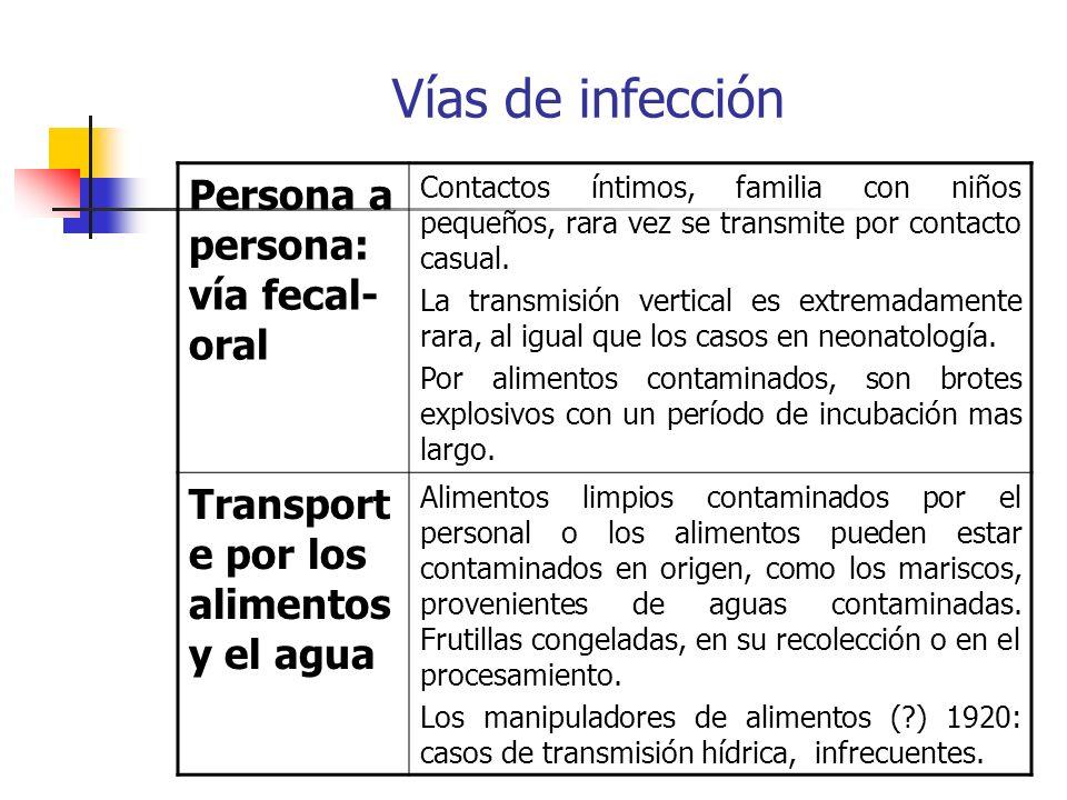 Vías de infección Persona a persona: vía fecal-oral